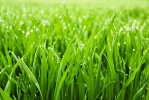 lawn fertilizer greenfield in